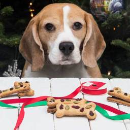 Calvin's Christmas Cookies (Dog Treats)