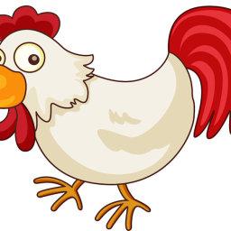 Chicken Main-Dish