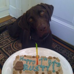 I Put Food Coloring In The Icing To Make It Blue And Iced Rest Of Cake With Brown Bacon Dog Treats Also Your Decorated