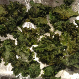 Kale Leaf Chips