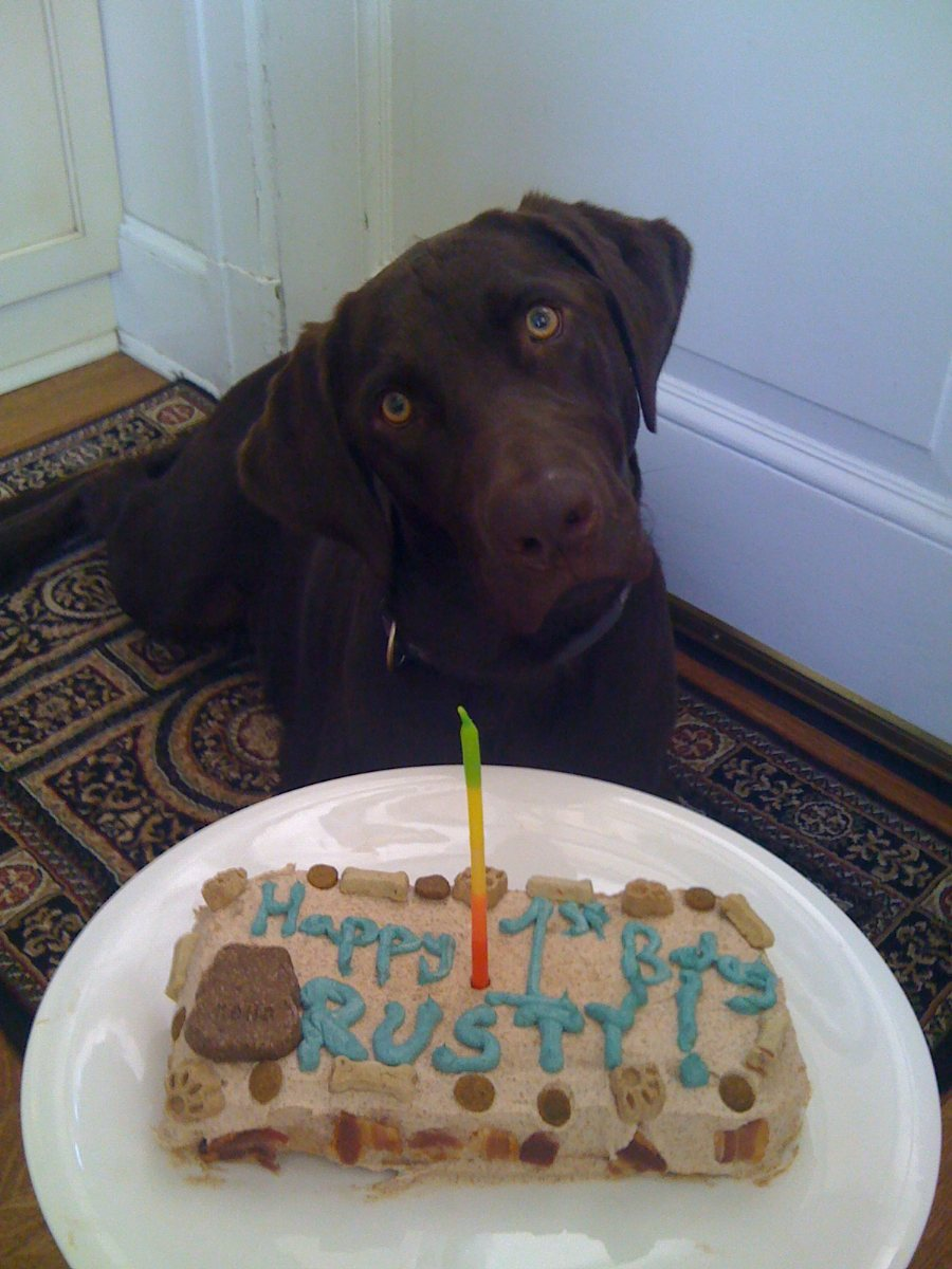 Birthday Cake Images Dogs : Dog Birthday Cake
